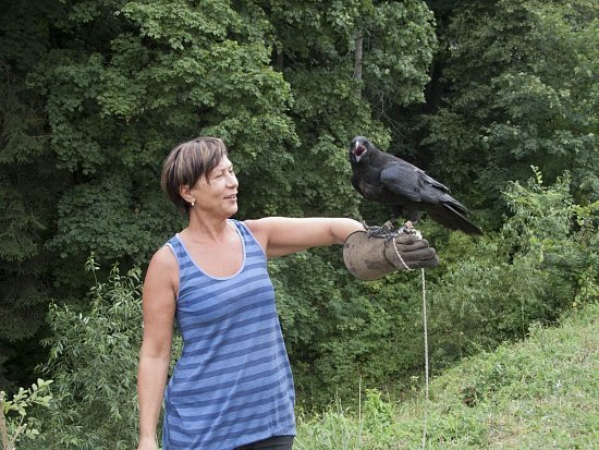 Černý pták