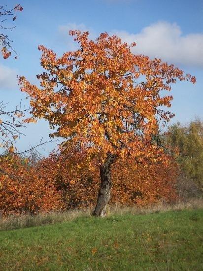 Výsledek obrázku pro podzim příroda