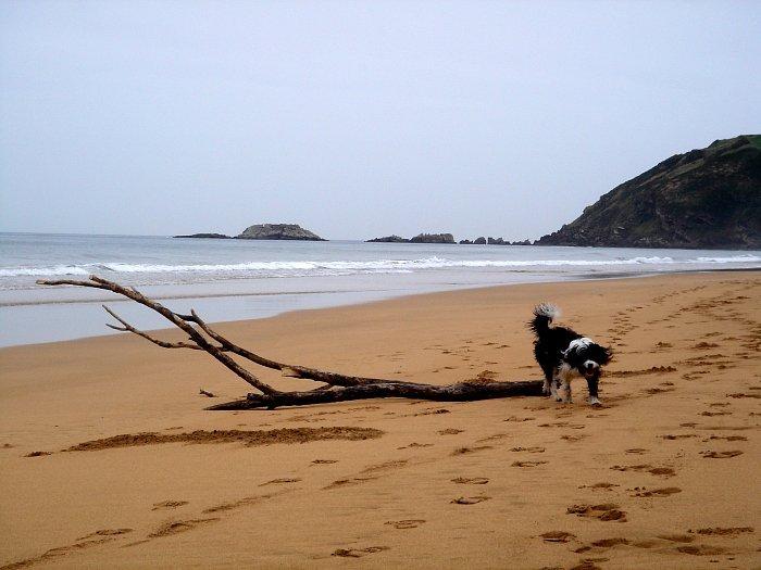 tipy na pláž mít sen o randění s někým